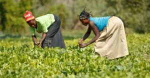 Leis prejudicam trabalho das mulheres na maior parte do mundo, diz relatório do Banco Mundial