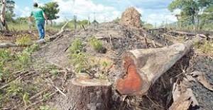 Câmara aprova anistia para multas ambientais de municípios