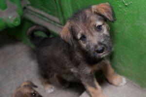 Câmara aprova prisão para quem matar cães e gatos