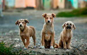 Vereadores aprovam mais de R$ 182 mil para castração de cães e gatos em situação de rua ou em abrigos em Uberlândia